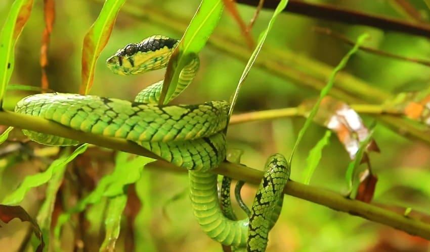 Животный мир дождевого леса Шри-Ланки