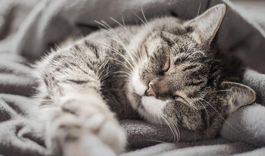 почему моя кошка мурлычет, почему кошка мурлычет, кошка мурлычет, мурлыканье кошки