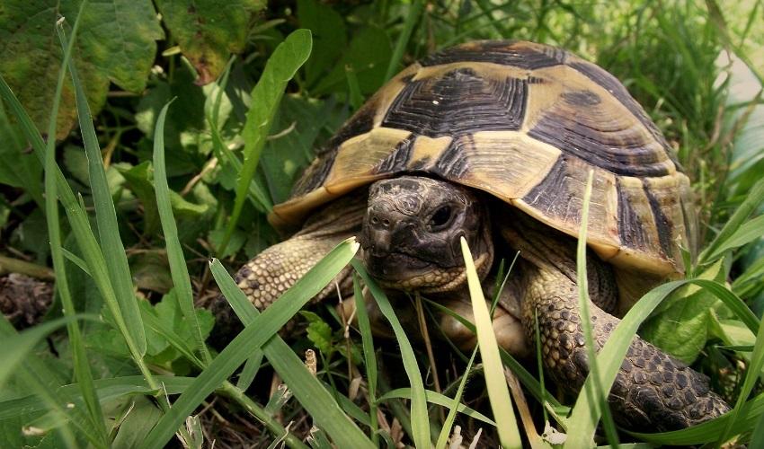 может ли черепаха сбросить панцирь, панцирь черепахи