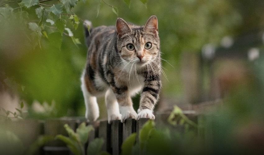 как хвост помогает кошке сохранять равновесие, как кошка сохраняет равновесие, кошка сохраняет равновесие, равновесие кошки