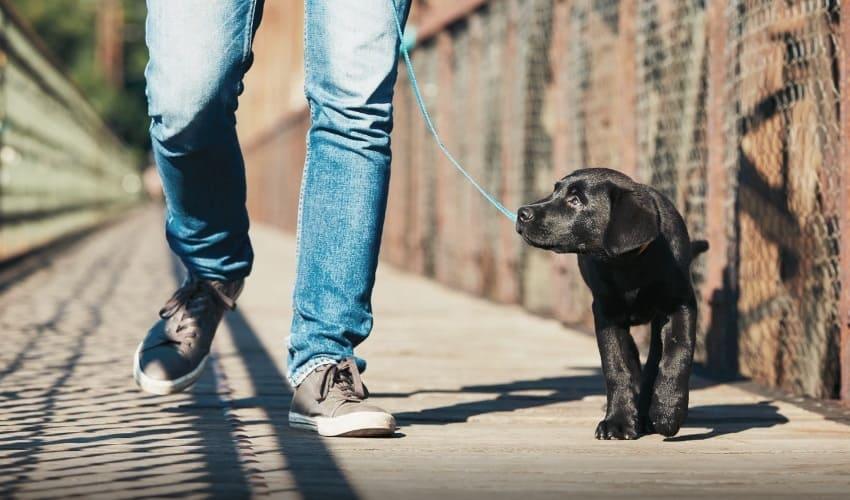 почему моя собака виляет хвостом когда встречает меня, собака виляет хвостом