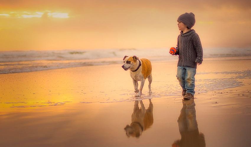 почему мне нужно выгуливать собаку каждый день, выгуливать собаку, зачем выгуливать собаку, зачем выгуливать собаку каждый день