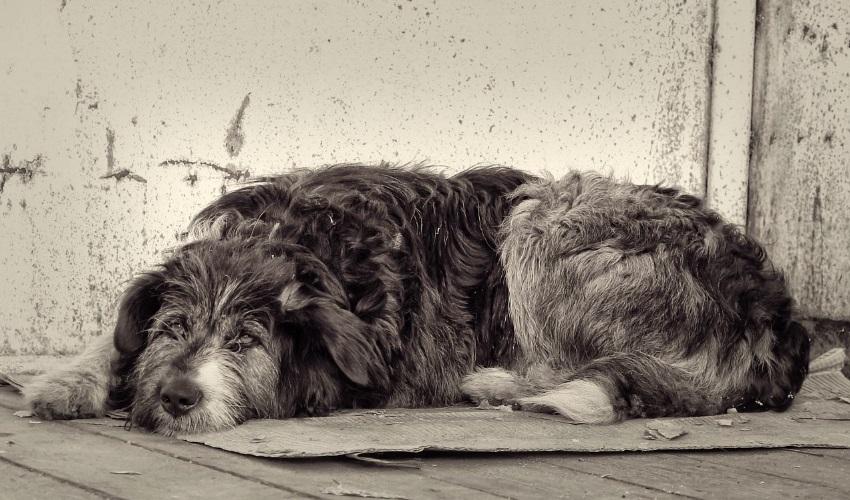 что делать если собака умрет, умершая собака, что делать когда умрет собака