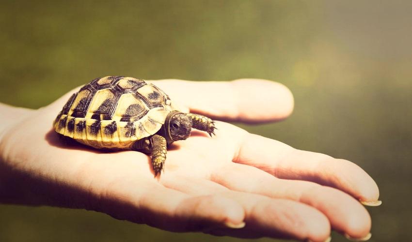 можно ли приносить животных в школу, приносить животное в школу, принести животное в школу