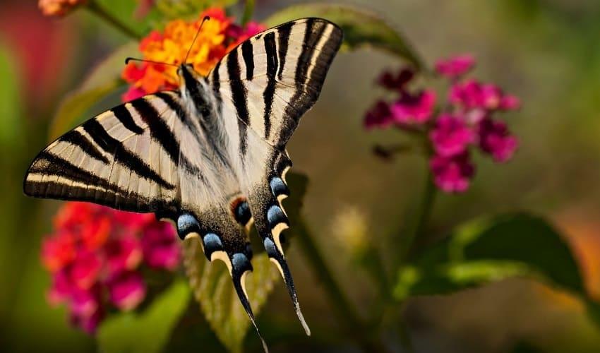 почему бабочки и другие насекомые перелетают с цветка на цветок, почему бабочки перелетают с цветка на цветок, почему насекомые перелетают с цветка на цветок
