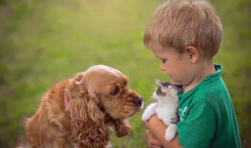 Может ли кошка или собака приносить пользу моему здоровью?