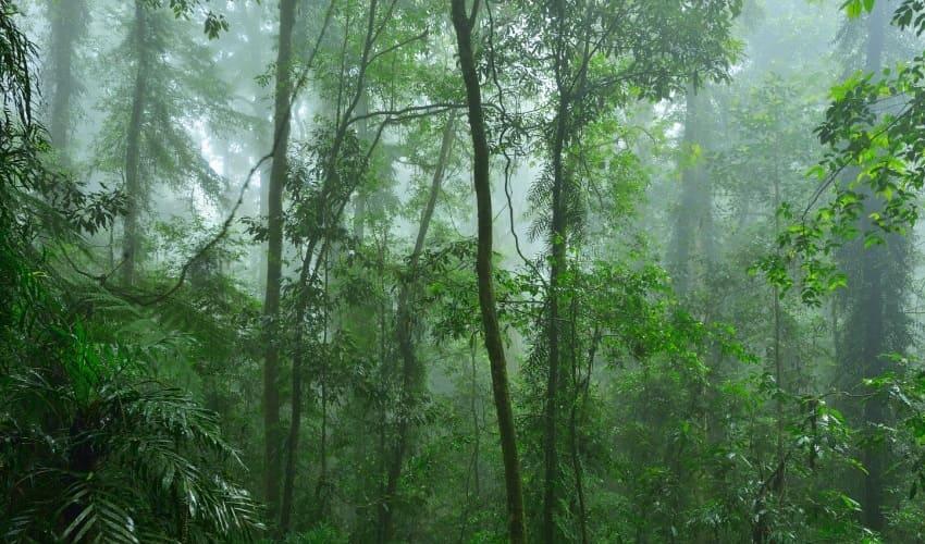 почему тропические леса называют легкими планеты, что называют легкими планеты, легкие планеты