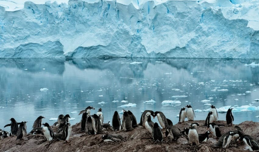 антарктида, на пути к антарктиде
