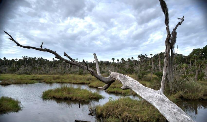 крупнейшие болота европы, болота европы