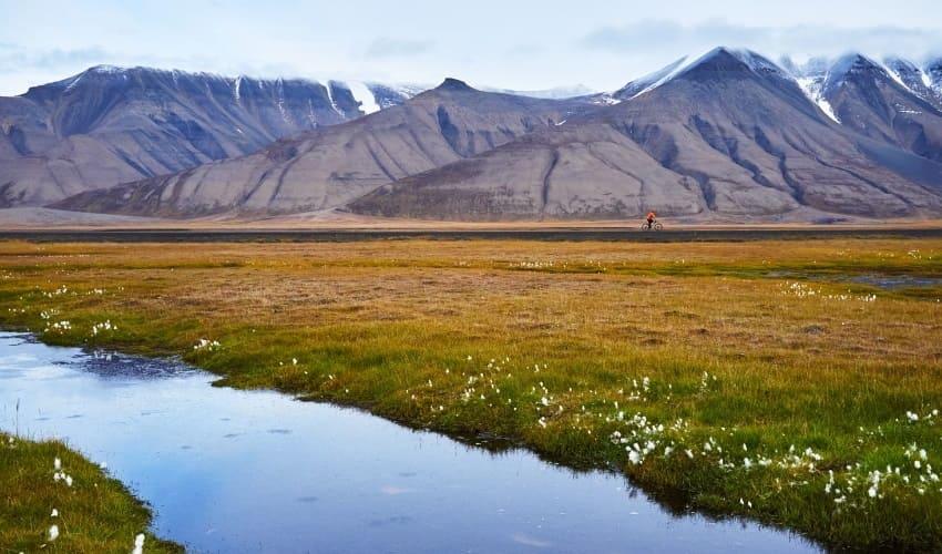 растительность севера европы, растения севера европы, растения европы