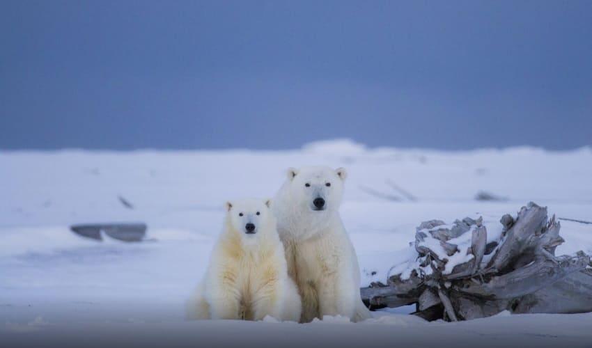 северный полюс земли, северный полюс