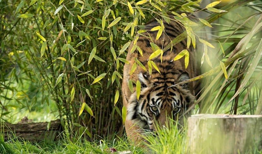 животный мир на юге азии, животный мир южной азии, животные южной азии, какие животные живут на юге азии