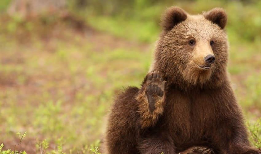животный мир лесной зоны европы, животные европы
