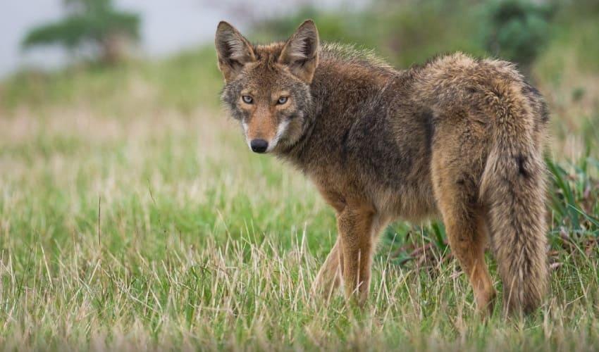животные юга североамериканского континента, животные юга америки