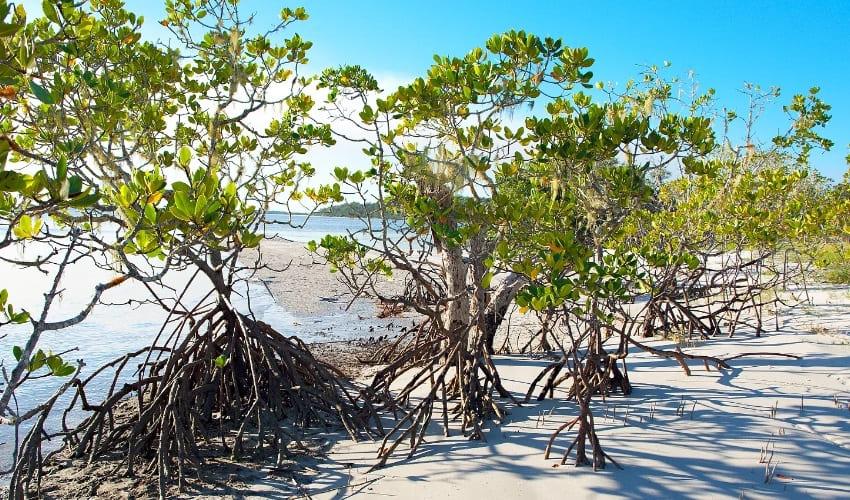 мангры и влажные леса океании