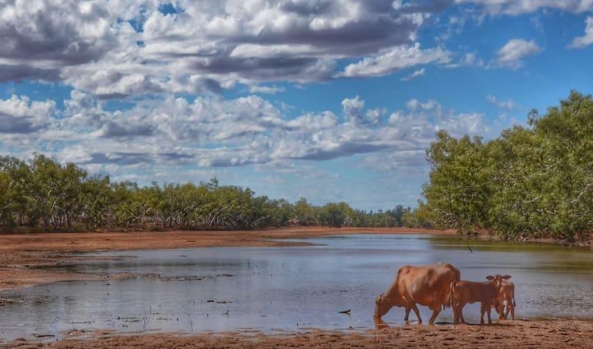 временные реки австралии