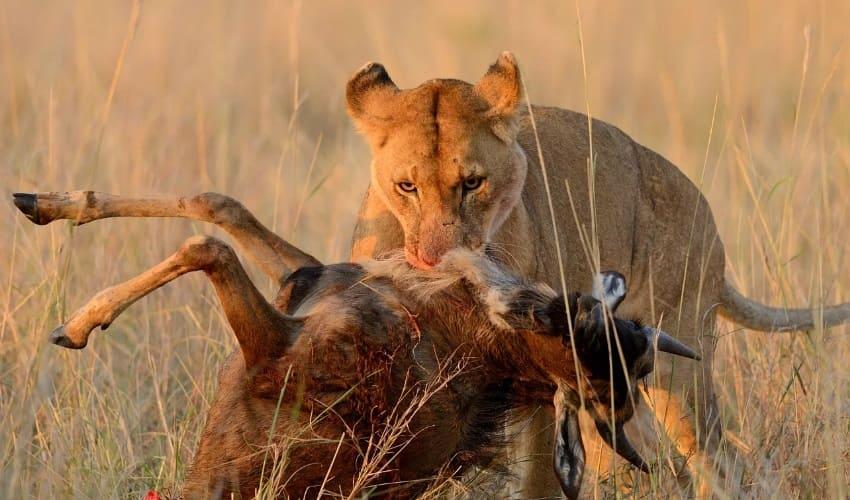 животный мир саванн, животные саванн, животный мир саванн африки