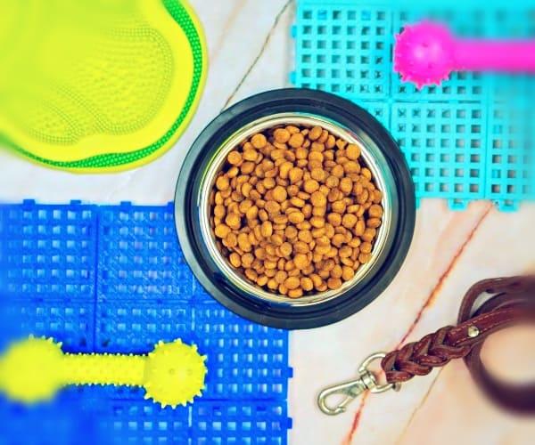 Рекомендации по сухому корму для собак от зоомагазина онлайн