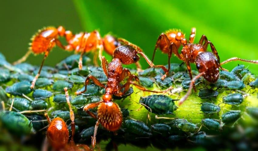 Аксессуары для муравьиной фермы