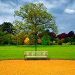 Укладка газона: необходимый атрибут ландшафтного дизайна