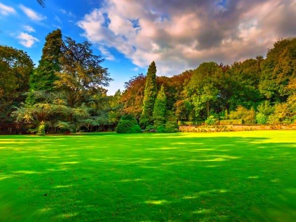 Преимущества укладки газона в ландшафтном дизайне
