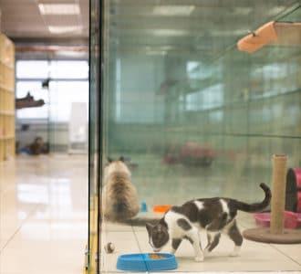 Что такое отель для передержки животных?